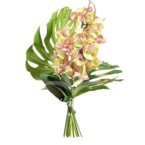 Orchidea confezionata fiori de berto consegna fiori a for Costo orchidea