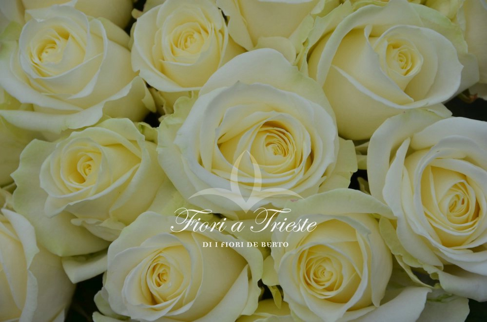 Foto Bouquet of Long-stemmed White Roses
