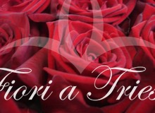 12 ROSE ROSSE SUPER PROMO!