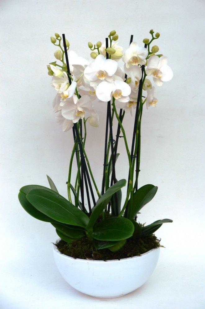 Fiori Bianchi Gambo Lungo.Ceramica Con Phalaenopsis 6 Rami Fiori De Berto Consegna Fiori
